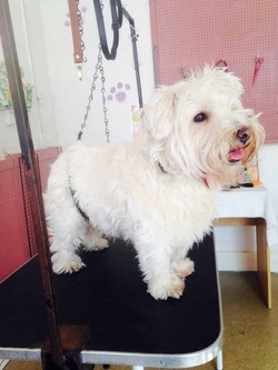 Dog Groomer Morecambe